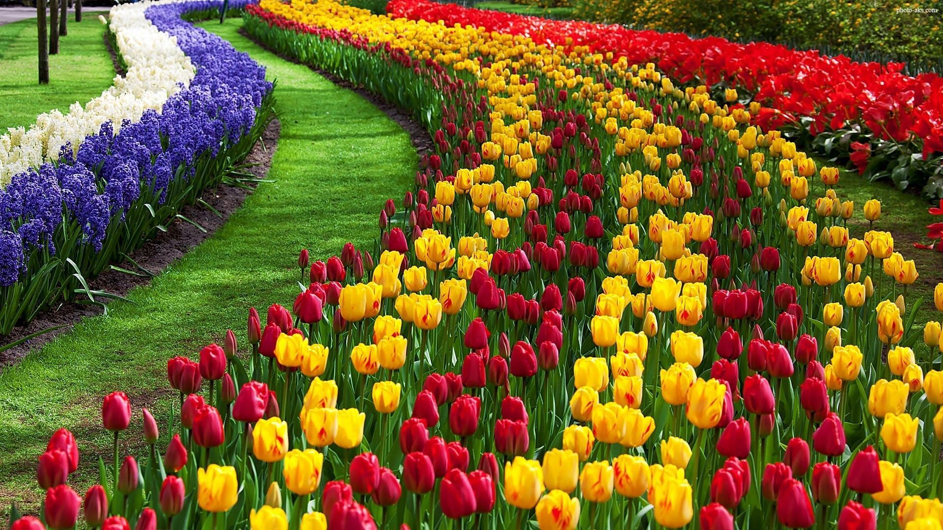 نمایشگاه گل و گیاه اسن
